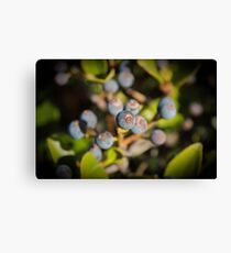 Blue Berry Surprise Canvas Print
