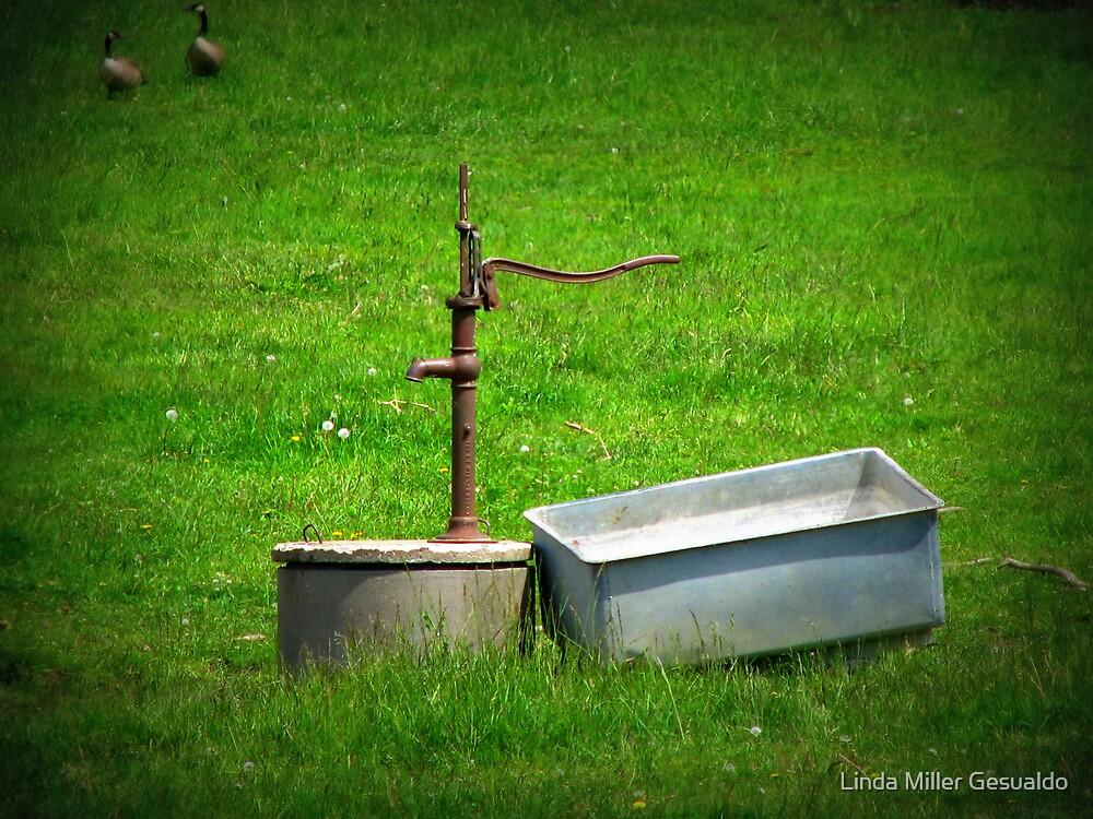 Country Life by Linda Miller Gesualdo