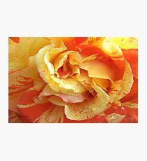 Sunshine Rose Photographic Print
