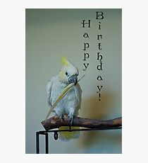 Birthday Bird Photographic Print