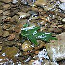 leaf in water by AVNERD
