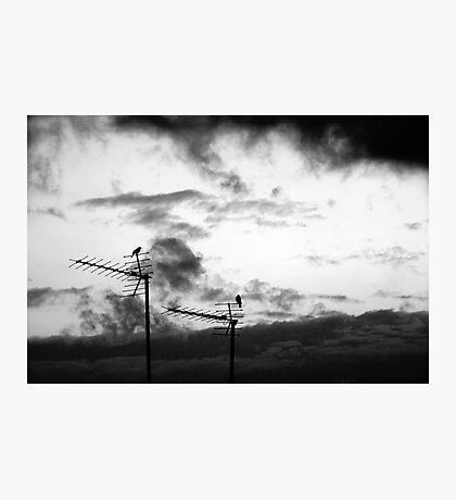 Harbingers Photographic Print
