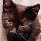 Cat Hera #cat #kitty by JBJart