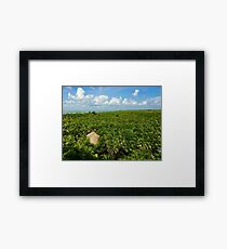 Sian Ka'an (Pictures of Mexico) Framed Print