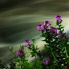 Flowers Over Mill Creek by Melody Ricketts