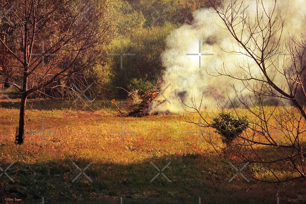 Bonfire in the Paddock by Elaine Teague