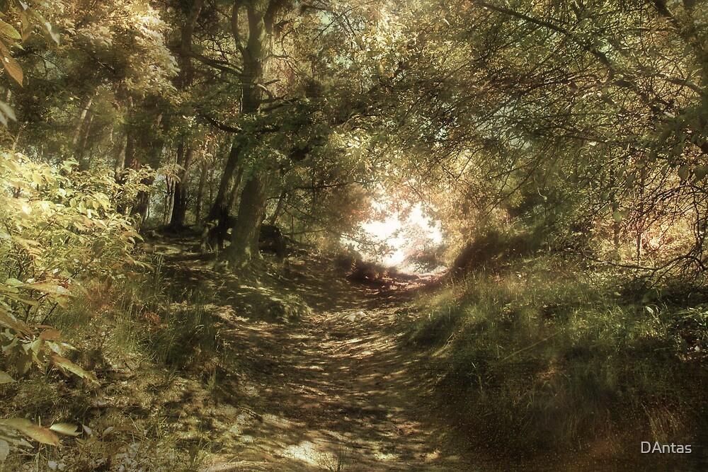 Up The Path by DAntas