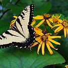 Blue Ridge Butterfly by Sunshinesmile83