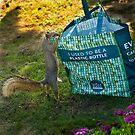 Neugieriges Eichhörnchen von Celeste Mookherjee