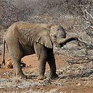 HUNGRY BABY - DER ELEFANT - Loxodonta Africana von Magriet Meintjes