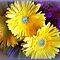 *Chrysanthemums Challenge - Gorgeous Flower Cards*
