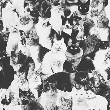 Katzen für immer von florentbodart
