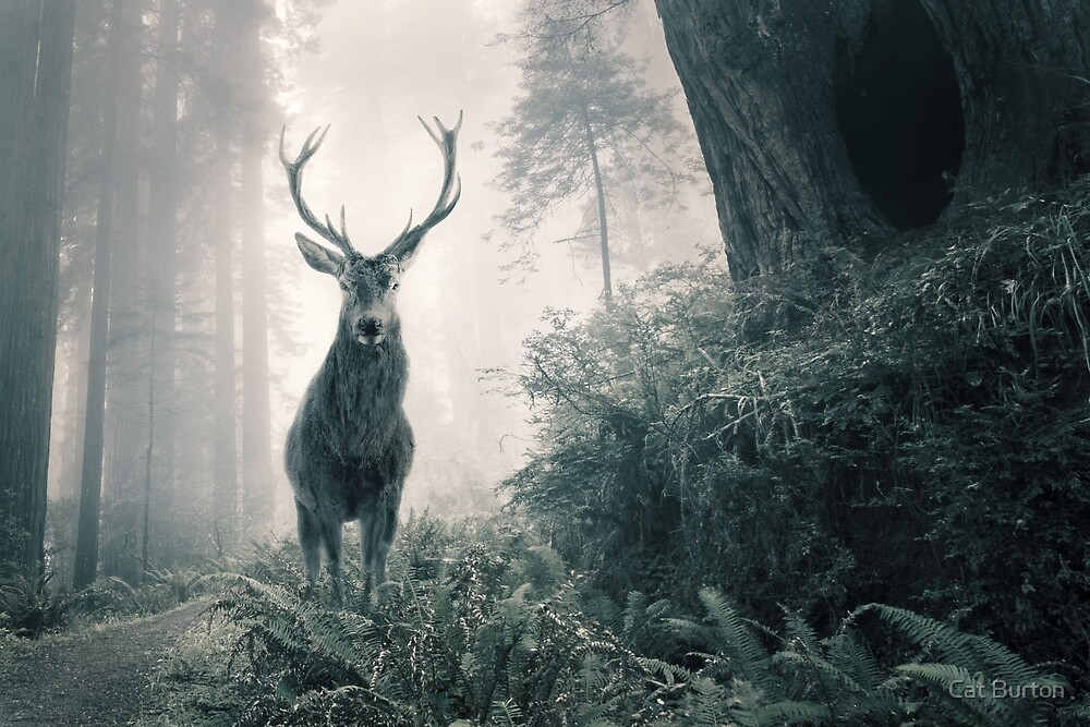 """""""Guardian Of The Forest"""" by Cat Burton by Cat Burton"""