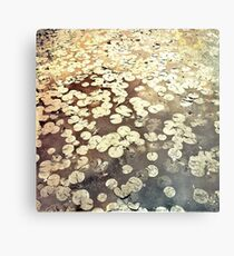 Golden Lily Pads - Art Photography - Nature Decor Metal Print