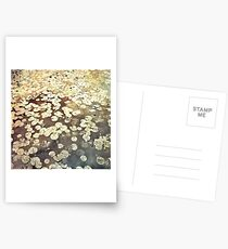 Golden Lily Pads - Art Photography - Nature Decor Postcards