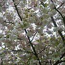 Spring 5 by Davies72