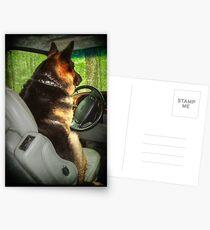 Designated Driver Postcards