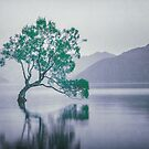 """""""The Tree In The Lake"""" by Cat Burton by Cat Burton"""