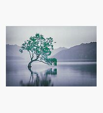 """""""The Tree In The Lake"""" by Cat Burton Photographic Print"""
