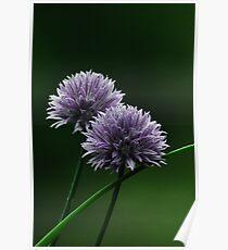 Onion Flower Poster