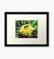 Honey Bee on Dandelion - Nature Photography Framed Print
