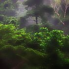 A densley wooded Rainforest in North Queensland by Imi Koetz