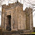 Bunratty Castle by Finbarr Reilly