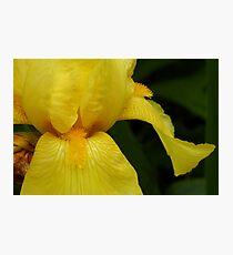 Yellow King Photographic Print