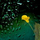 Gold in the dark by Jan Clarke