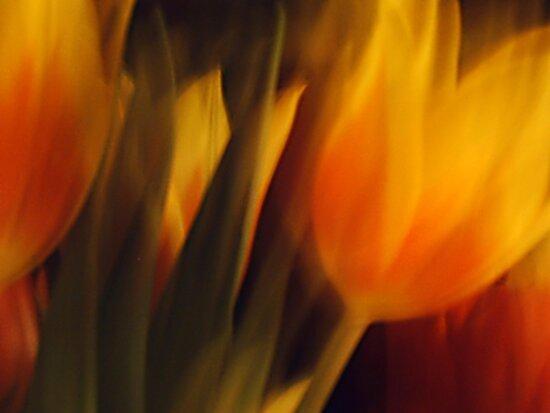 Flowers of Fire by Benedikt Amrhein