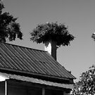House Plant by mojo1160