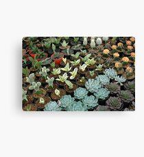 cactus Canvas Print