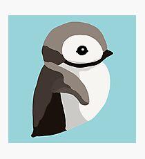 Pinguinküken Fotodruck