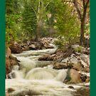 Rocky Mountain Streamin Dreamin by Bo Insogna