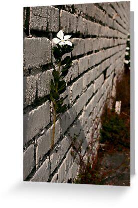 Wallflower by MMerritt