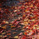 Autumns End by Catherine Davis