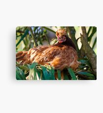 Mrs Henny Penny Canvas Print