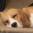 It's hard work being a beagle by Bouzov