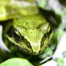 Mr. Frog by Stephanie Hillson