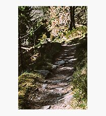Forest Dirt Road Photographic Print