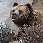 The Great Grizzly Bear by Jarede Schmetterer