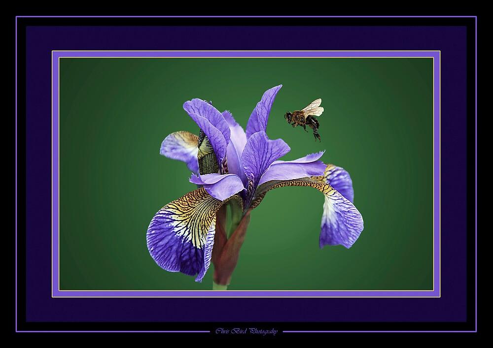 Iris nectar. by Chris Bird