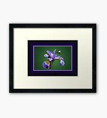 Iris nectar. Framed Print