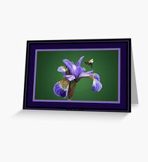 Iris nectar. Greeting Card