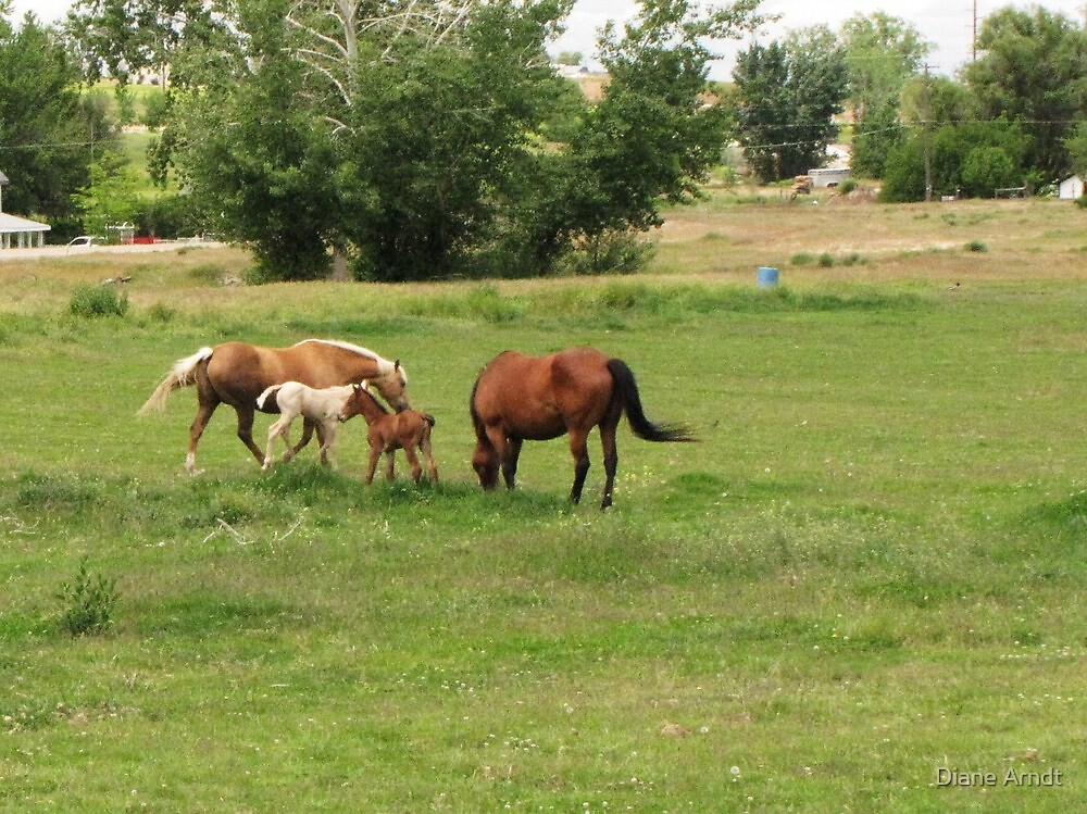 Two new colts as of today....the brown one came in the middle of the night. by Diane Arndt