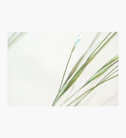 Desert Grass Photographic Print