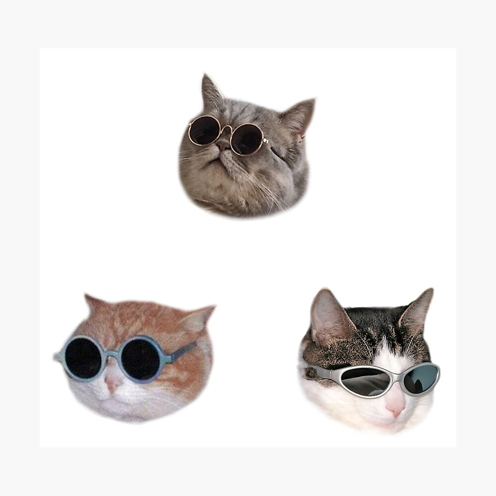 Cool Kitties Sticker-pack Photographic Print