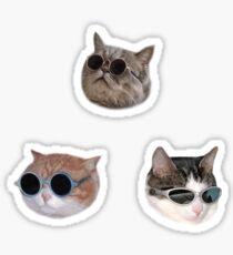 Cool Kitties Sticker-pack Sticker