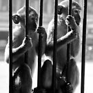 outside the bars by gompo