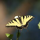 Fly Away by DebbieCHayes
